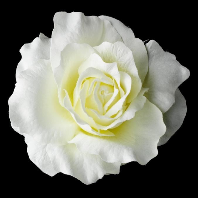 valkoinenkukka1